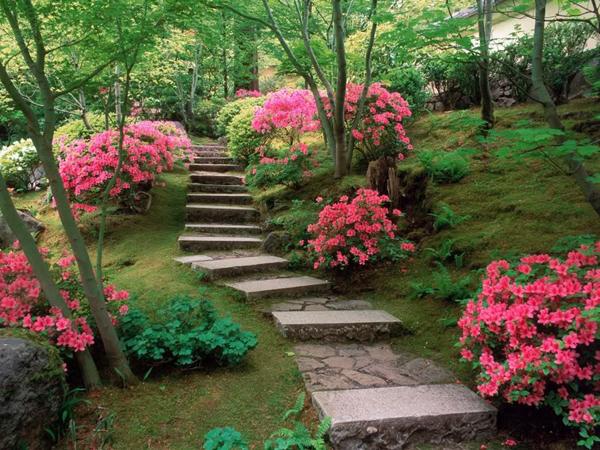 Красива градина 4