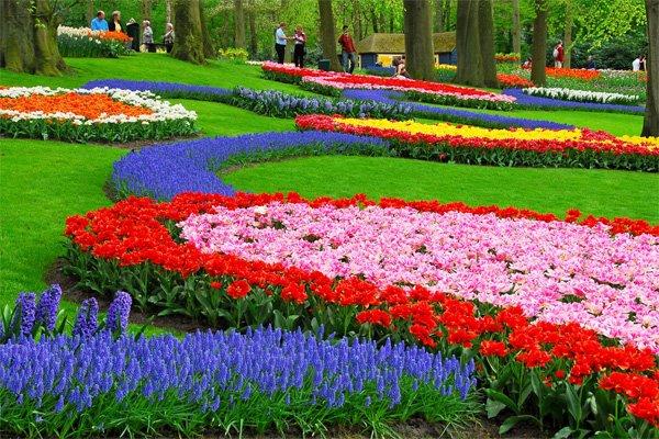 Красива цветна градина