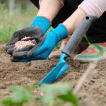 Есенни торове – кои са торовете подходящи за есенно подхранване кога и колко се тори с тях
