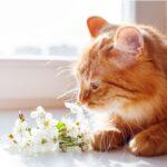 Ефикасни методи  за премахване миризмата на домашните животни