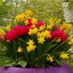 Садене на есенни луковици за пълна градина с пролетни цветя